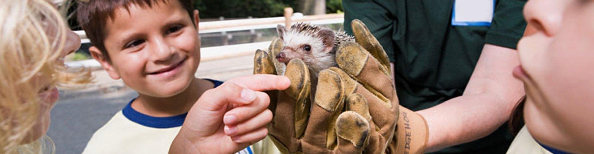 Hedgehog being held by a school kid