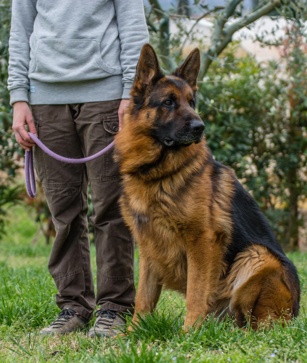operatrice con cane al guinzaglio