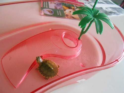 tartaruga in una vasca in plastica