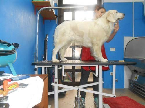 cane in clinica veterinario durante  un controllo