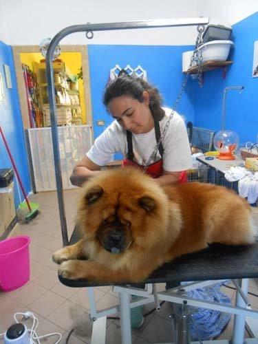 veterinaria mentre controlla un  cane in clinica veterinaria