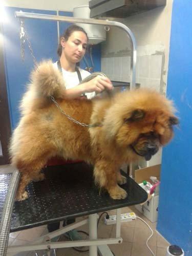 un cane in una clinica veterinaria