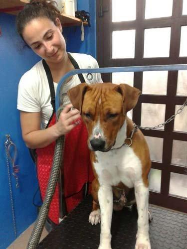 veterinaria controlla un beagle
