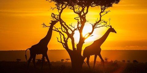 tour in kenya