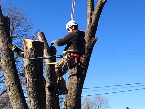 Tree removal, trimming and pruning services in St. Charles, MO