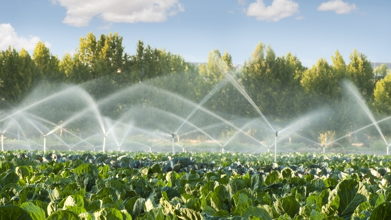 Water system in farm