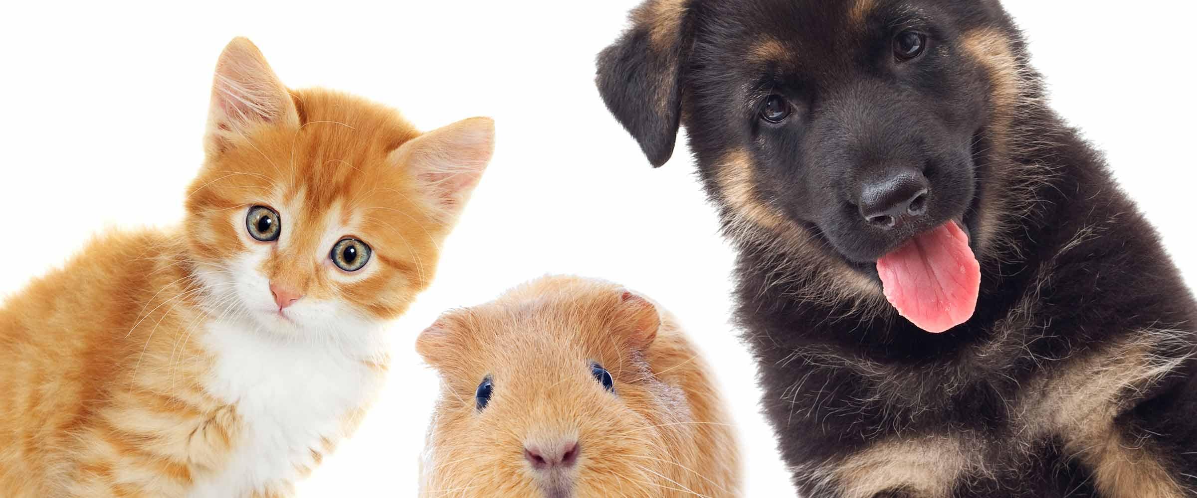morphettville veterinary clinic cat dog and hamster