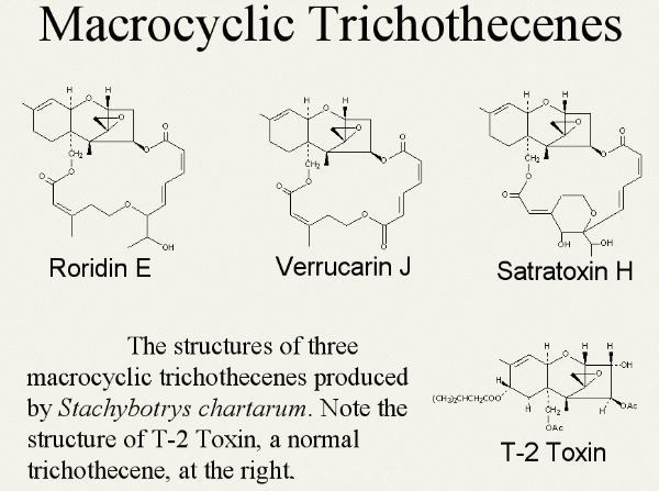 Macrocyclic trichothecenes are produced by Stachybotrys chartarum