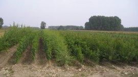 piante da frutto bono