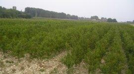 campi di piante bono