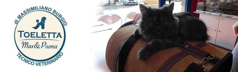 toeletta gatti infernetto