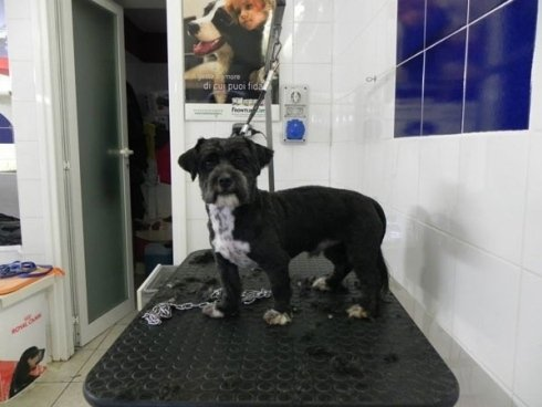 tosatura cani