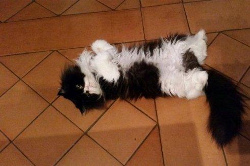 toeletta per gatti
