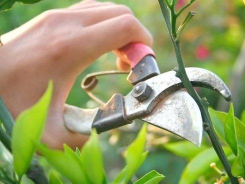 Il Giardinaggio dispone di un vasto assortimento di forbici per la potatura di piante e per la vendemmia.