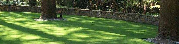 grass in public park