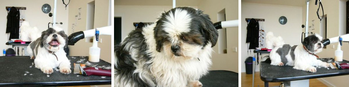 just for dogs grooming salon cute dog