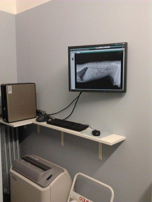 attrezzatura per ecografia veterinaria