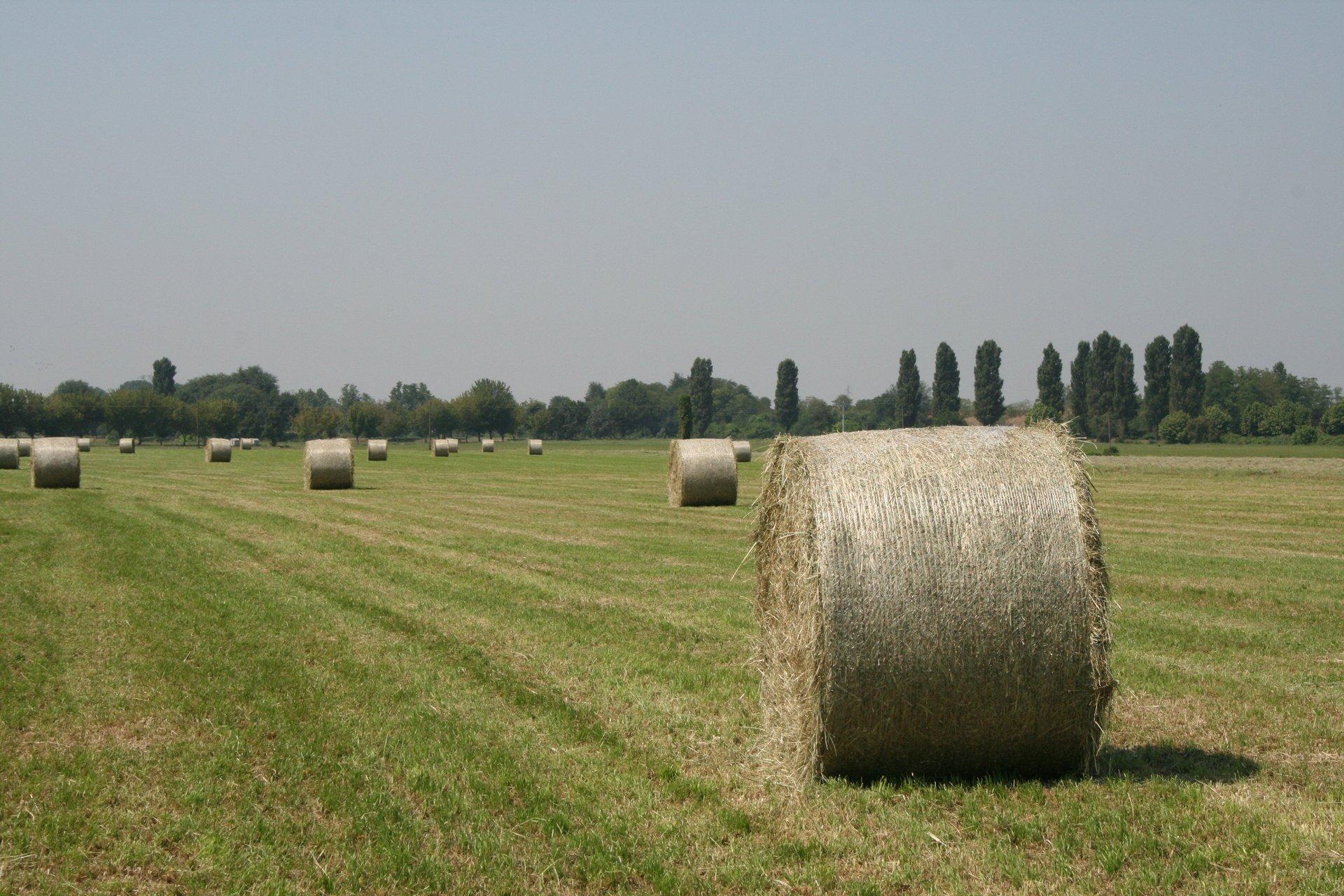 campo per agricoltura