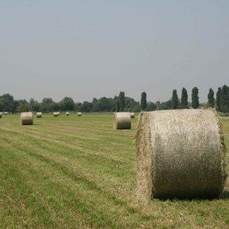 campo con rotoli di fieno