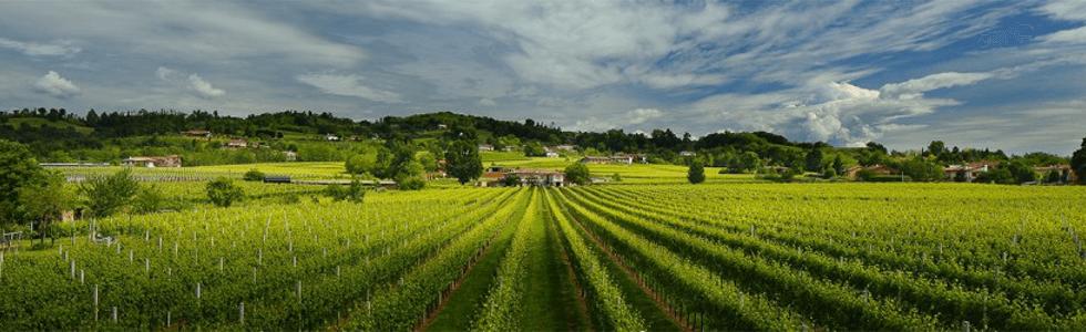vitivinicoltura veneta