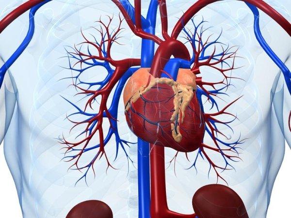 Servizio di Cardiologia Santa Maria Capua Vetere
