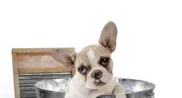 articoli per cani, igiene per cani, antiparassitari cani