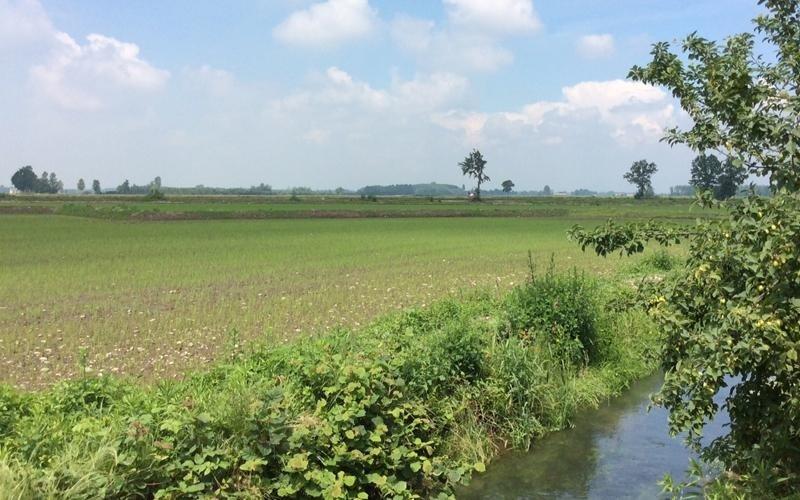 produzione riso novara