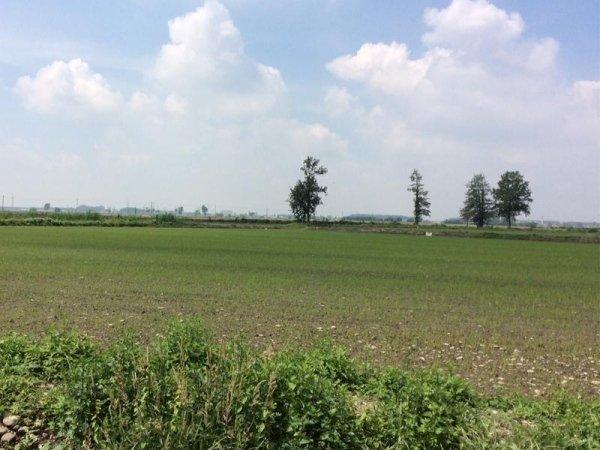 coltivazioni di riso