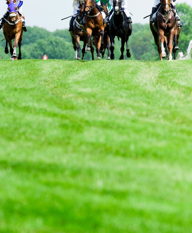 About Horse Racing