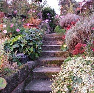 Steps in Latona's garden