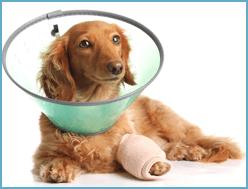 cure per animali malati