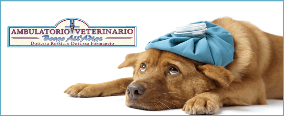 ambulatorio veterinario borgo all'adige