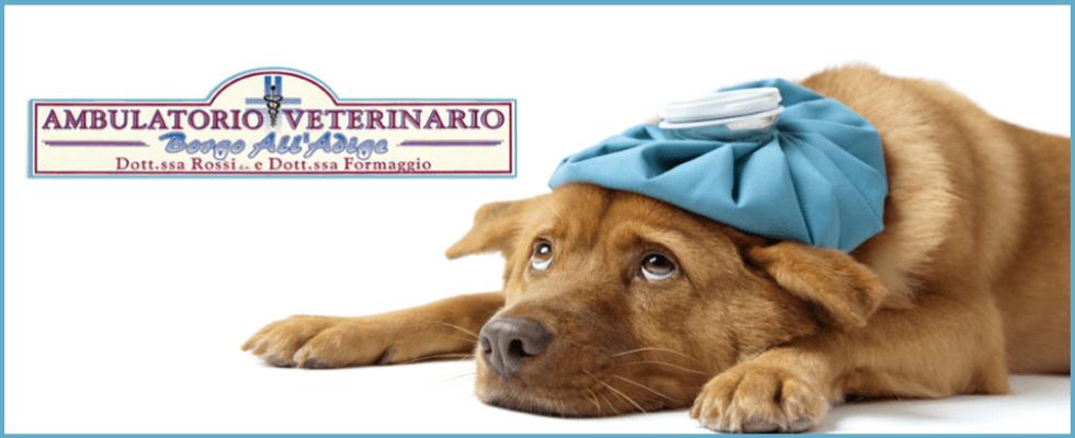 ambulatorio veterinario borgo all'adige