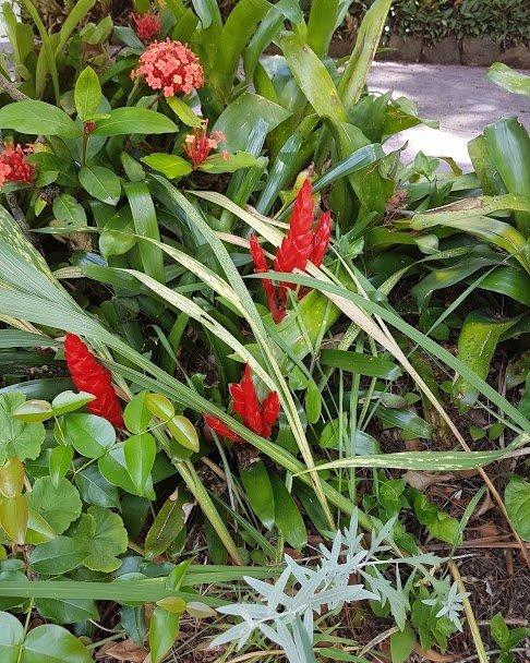 Red color flower bush