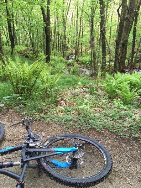 una mountain bike di colore blu in un bosco con alberi e felci