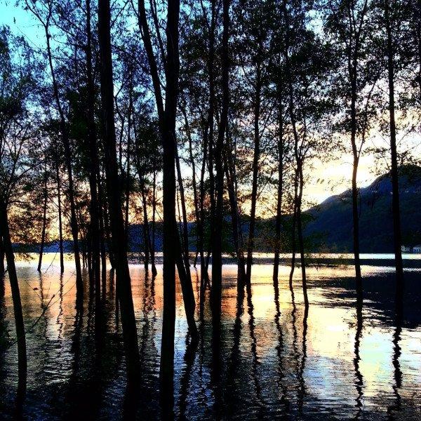 degli alberi dentro a dell'acqua e dietro vista del tramonto con le montagne