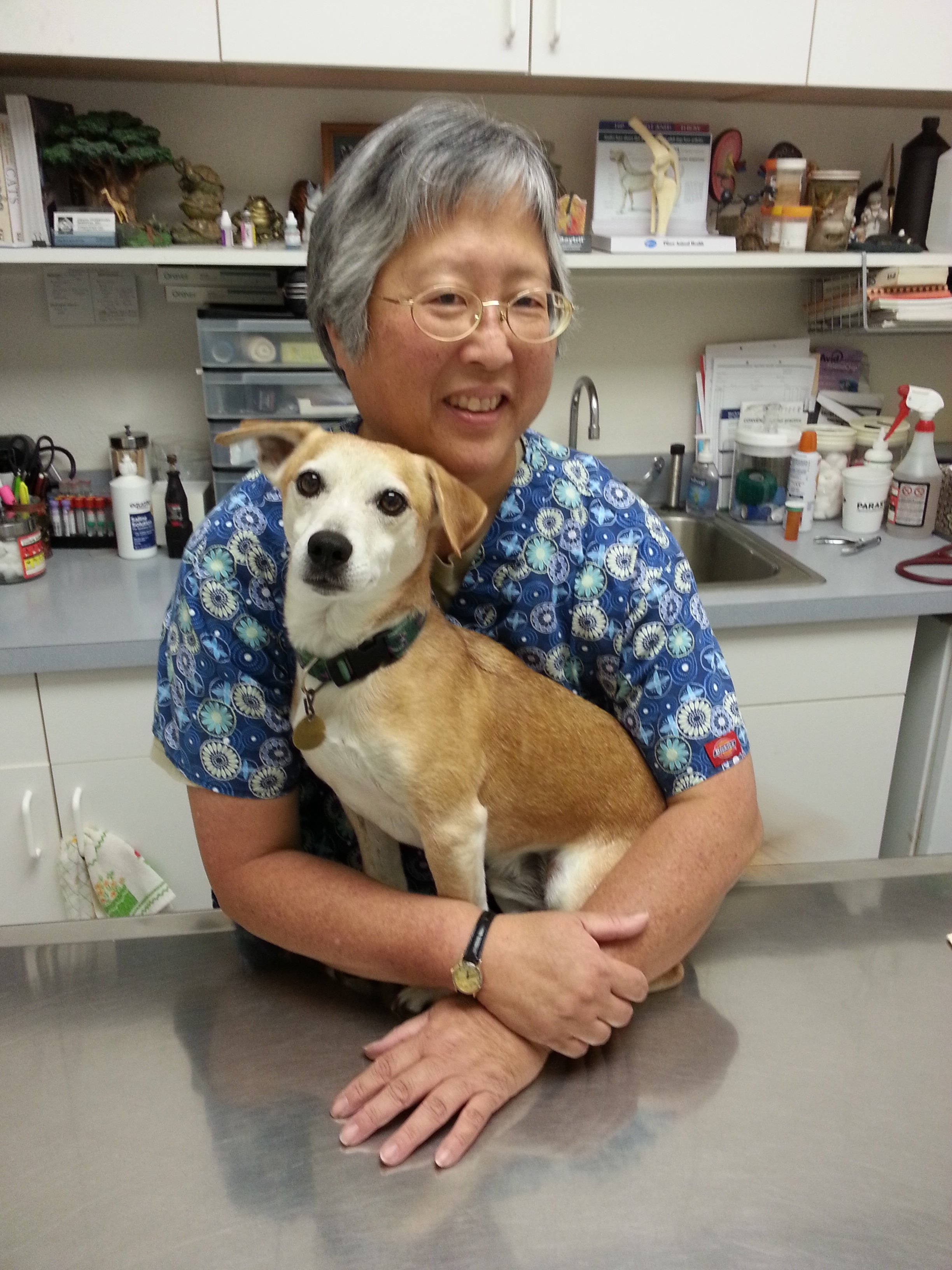 Honolulu Hawaii Ohana Veterinary Hospital Inc Dr Kam