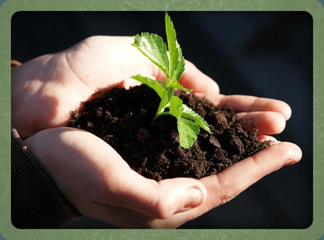 Organics - Liverpool - Greenleaf Systems Ltd - Plant on hand
