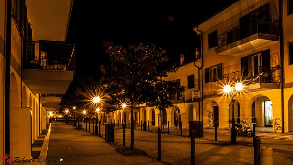 Le magnolie di notte3