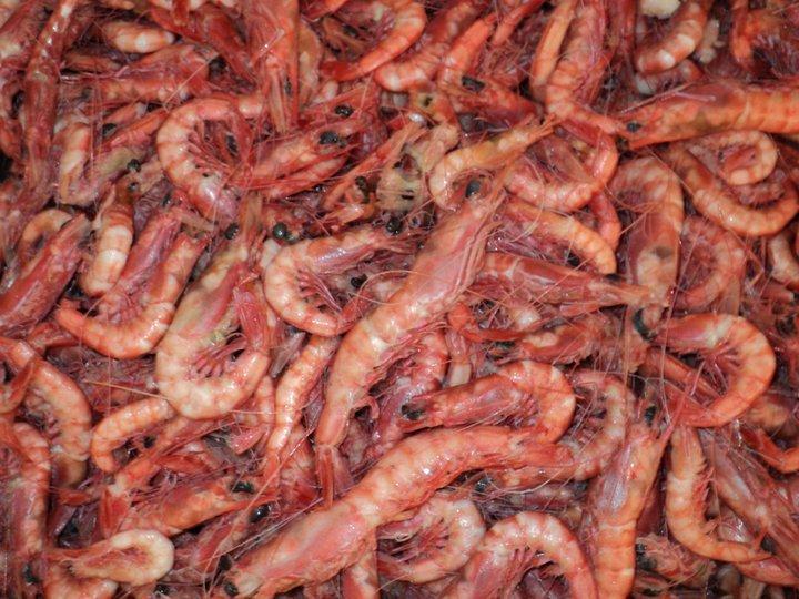 Royal Reds - Aquila Seafood Bon Secour Al