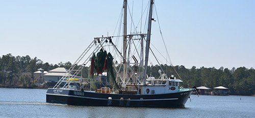 Boat on the voyage to catch shrimps locally in Bon Secour, AL
