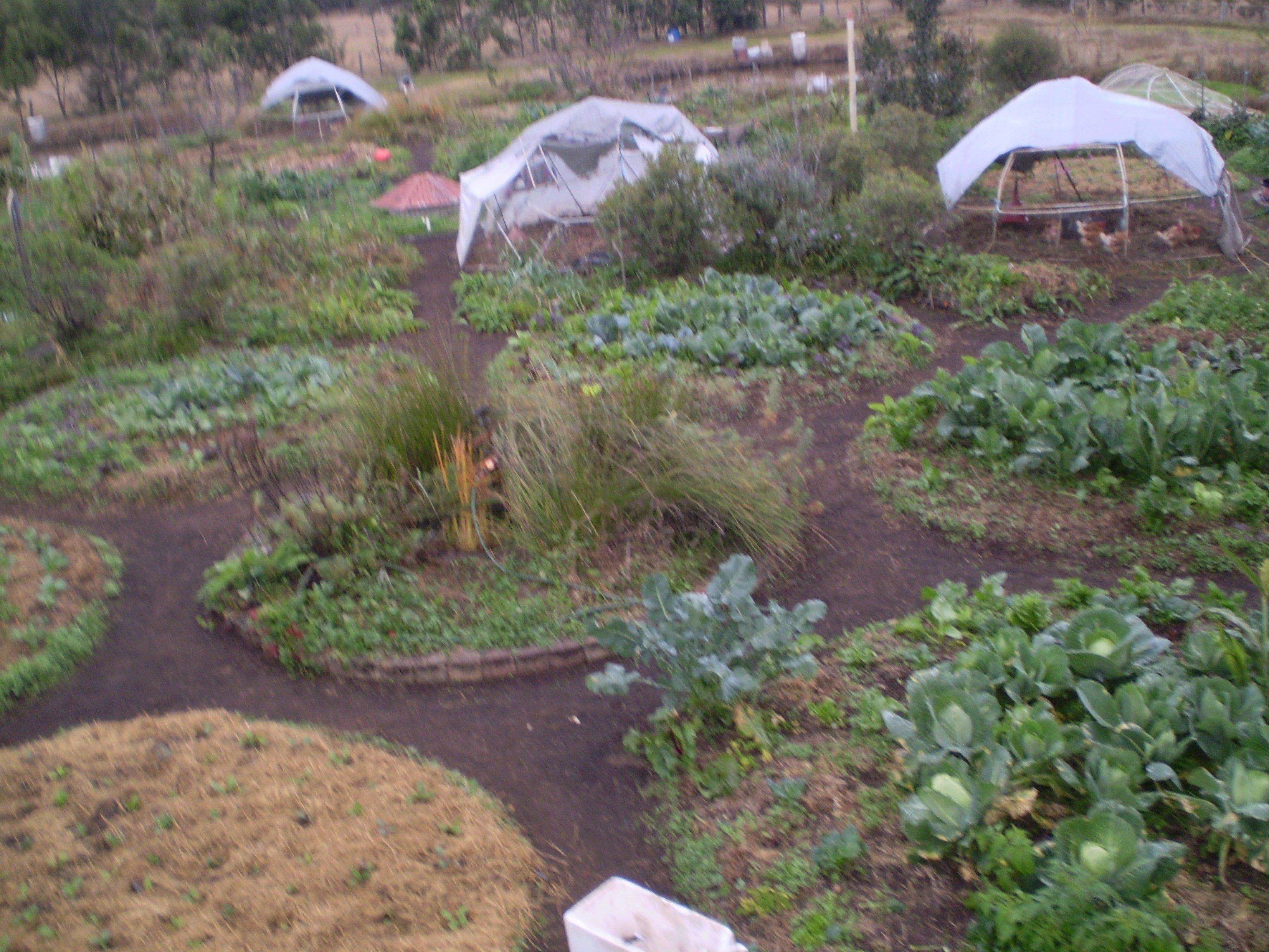 purple pear farm anambah nsw farm practices