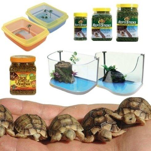 Avicola Gianini offre una vasta selezione di prodotti per tartarughe, d
