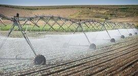 sementi per agricoltura