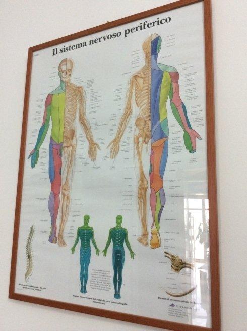 ortopedia caruana