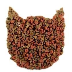 cibo secco gatti