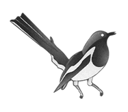 Magpie Metal Management logo