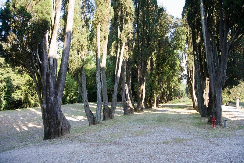 Viale alberato di accesso al Castello di Villanova