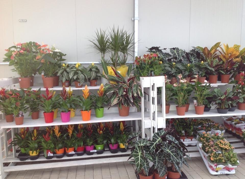 Piante da interno colleferro roma officina botanica - Piante rampicanti da interno ...