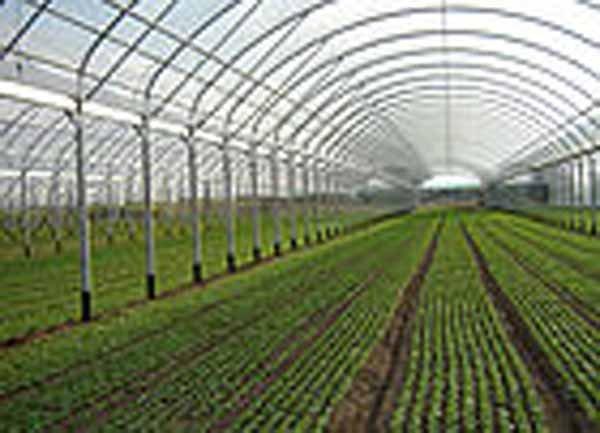 coltivazione protetta